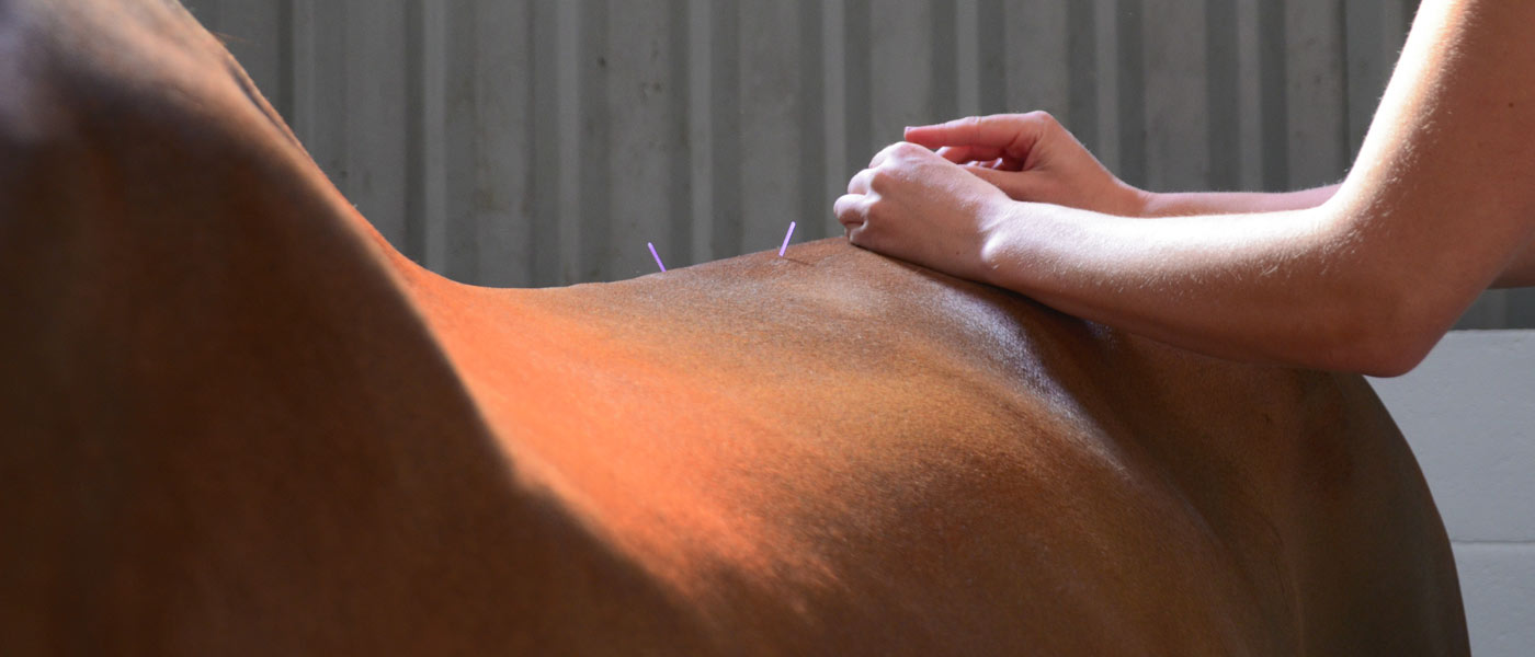 Specialist Equine Chiropractic & Acupuncture